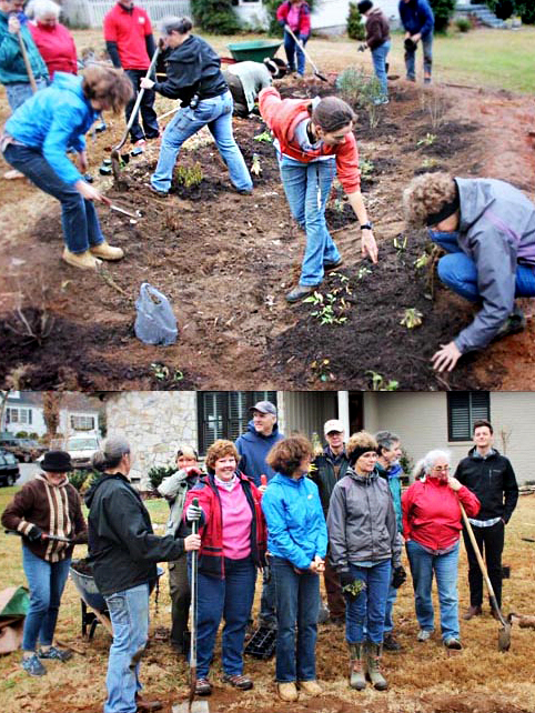 Two pics of volunteers planting in vertical arrangement